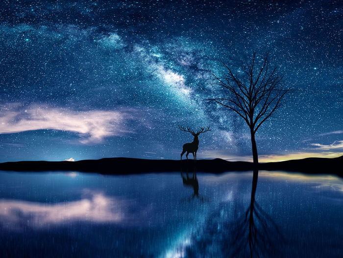 Silhouette deer reflecting in lake against starry sky at night