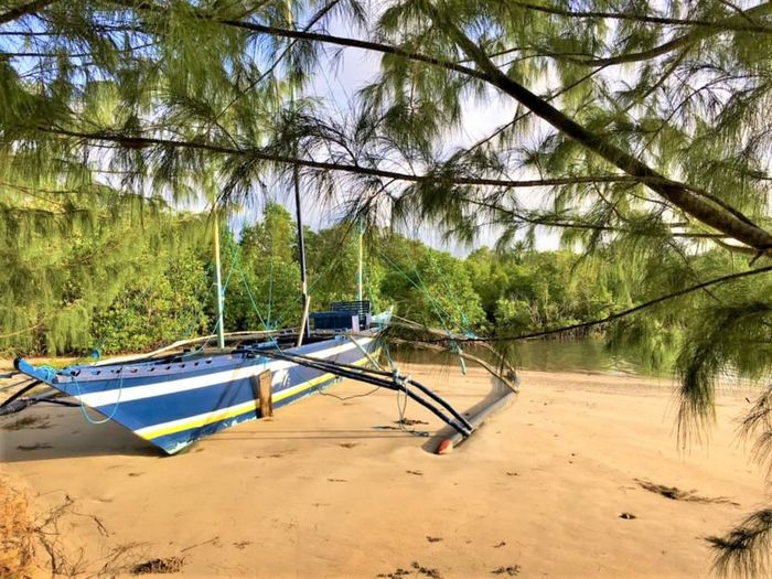 Boat Finally at Rest Tree Plant Land Nature Day Tranquility No People Beach Forest Beauty In Nature Tranquil Scene Water Growth Sand Scenics - Nature Outdoors Absence Sunlight Nautical Vessel