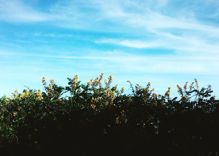 Nature Growth Blue Sky No People Tree Beauty In Nature Outdoors Day Close-up Freshness Flower Head Fragility Plant Flower Beach Water Beauty In Nature Nature