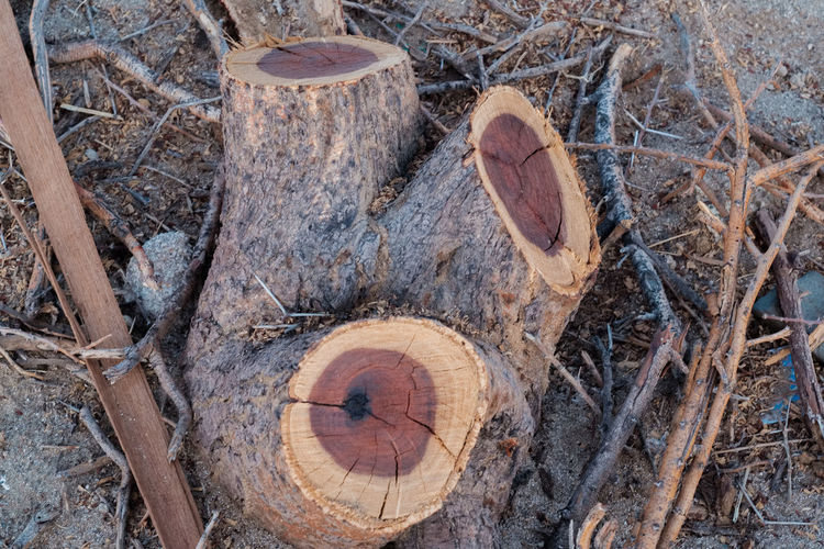 Cut Wood Cut Plant Plant Life Plants Nature Desert Full Frame High Angle View Close-up Tree Ring Woodpile Forestry Industry Wood Firewood Bonfire Timber Tree Stump Deforestation Lumber Industry Pile Log