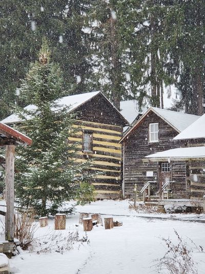 Snow covered houses and trees by building