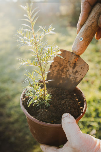 Hands of a man planting a young tree in a flowerpot with a shovel. gardening.