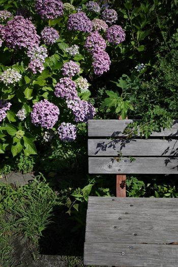 Bench Plant Flower Flowering Plant Beauty In Nature Nature Day Sunlight Park