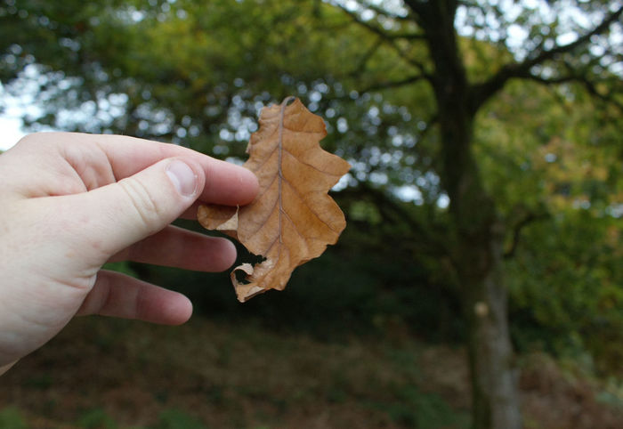 Human Hand One Person Focus On Foreground Tree Holding Change Real People Outdoors Leaf Human Body Part Day Close-up Nature People Adults Only Adult Autumn Autumn Colors Autumn Colours Autumn Leaves Autumn🍁🍁🍁 English Countryside Hand