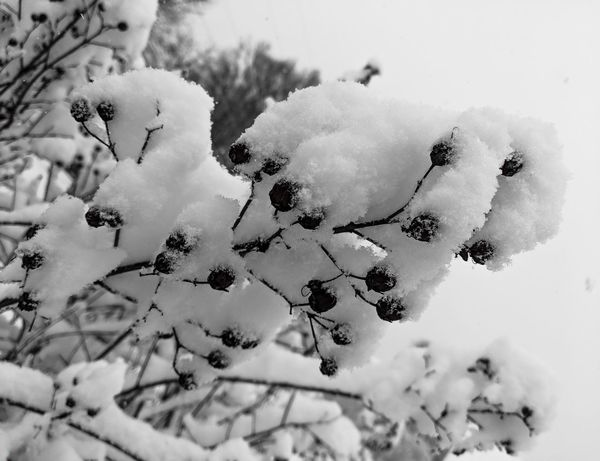 Snow Vibesofvisuals Visualsoflife Snow Snow ❄ Snow Covered EyeEm Selects Shades Of Winter No People Nature Winter Outdoors Close-up Day Beauty In Nature
