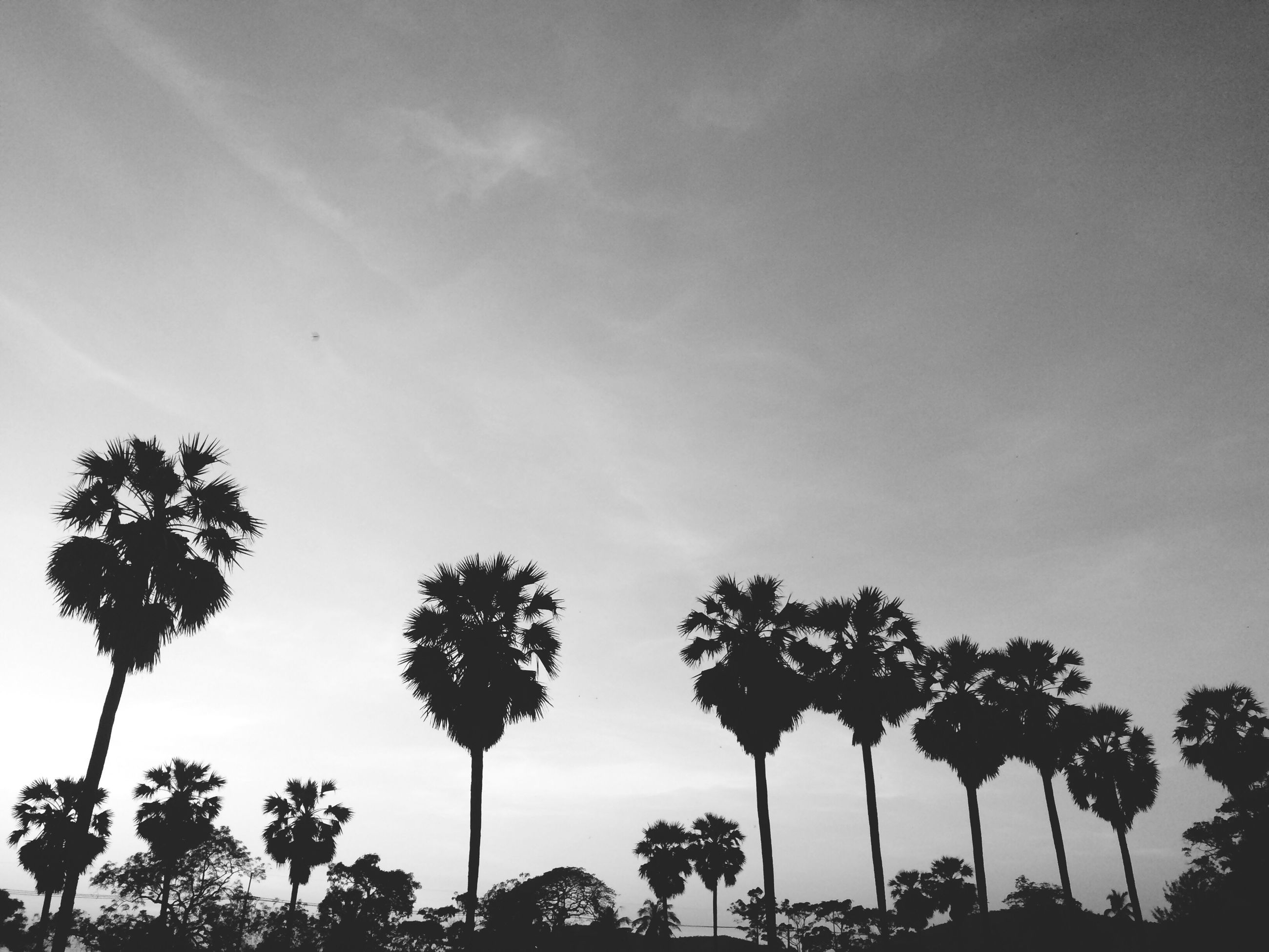 low angle view, tree, palm tree, sky, silhouette, growth, tranquility, beauty in nature, nature, scenics, tranquil scene, cloud - sky, tree trunk, sunset, coconut palm tree, outdoors, no people, street light, cloud, dusk