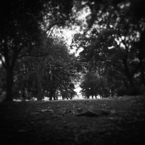 My Favorite Place Tree Nature Scenics Woods Park British Beauty In Nature Blackandwhite No People Solitude Tranquility Peace Peace And Quiet Natural Mother Nature Gritty Dark Emotional Silent Moment Silence Still