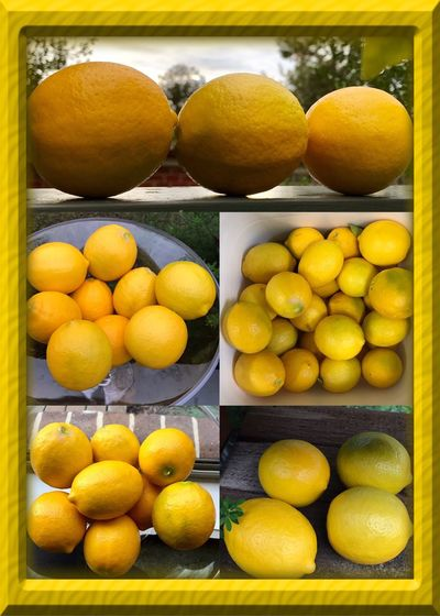 Free homegrown lemons from my work 🍋🍋🍋 Lemons Homegrownlemons Freelemons Freebies Fruits ♡ Lemongrower Winter Fruits Lemon Life Foodie Healthylife Lemon Bunch Lemons At Work Fruit Life Lemons Of Eyeem Happy Thursday Lemon Collage 🍋🍋🍋