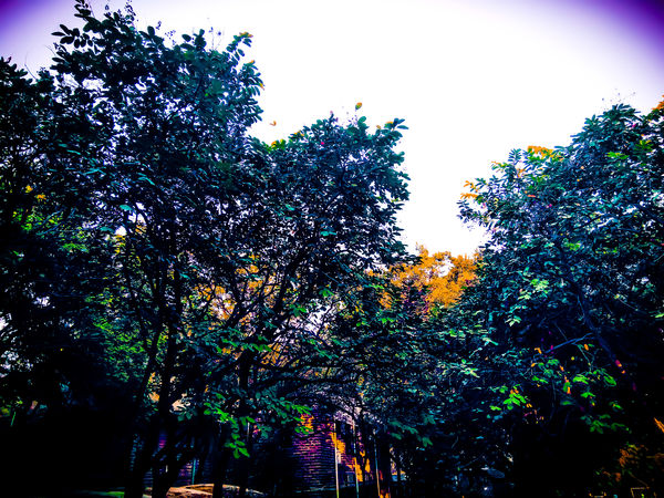 Low Angle View Silhouette Outdoors No People Sky Multi Colored Day Nature Tree