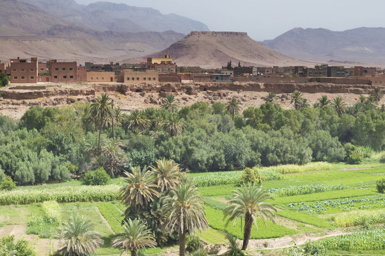 Morocco touristic details Morocco Morocco Travel Travel Agriculture Arabic Arabic Architecture Beauty In Nature Day Field Growth Landscape Mountain Mountain Range Nature No People Outdoors Palm Tree Rural Scene Scenics Sky Tourist Destination Tree