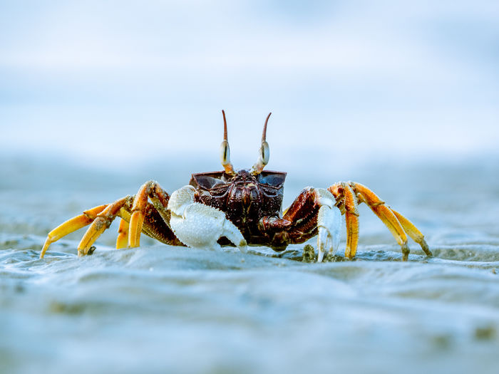 Surface level view of crab on sand against sky