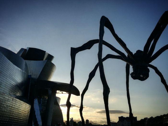 Spider in