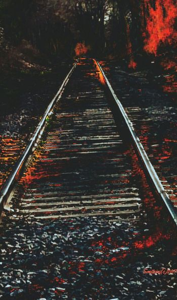 Tracks to Hell!! Forest Wood - Material Red Autumn Nature The Way Forward Outdoors Scenics Tree Day No People Beauty In Nature Haunted Photography Haunted Places Fire