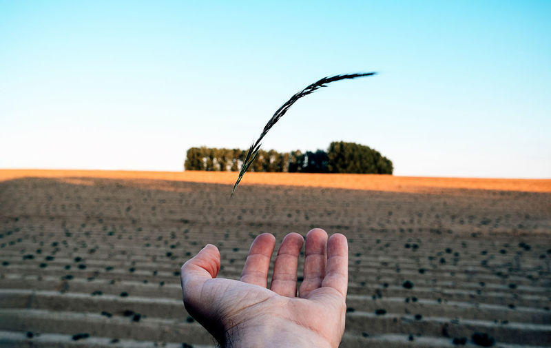 Close upon open hand standing on a cultivated field. green economy, sustainable agriculture.
