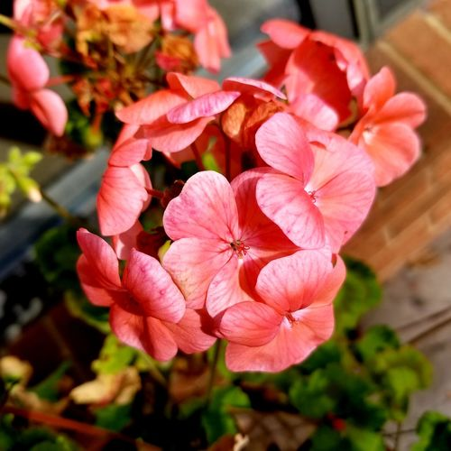 Flower Pink Color Plant Flower Head Petal Beauty In Nature No People Day Outdoors Nature Close-up Freshness Fragility Growth