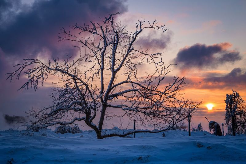 Bare trees on snow landscape against sky during sunset