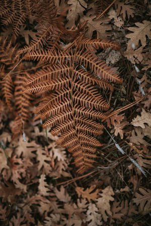 Fern Ferns Wallpaper Backgrounds Background Texture Fall Winter Autumn Autumn Leaves Leaf Plant Part Dry Close-up Nature Plant Land No People High Angle View Day Field Leaves Brown Outdoors Change Natural Pattern Pattern Dried Natural Condition Focus On Foreground
