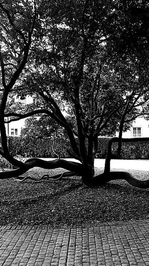 Snaketree