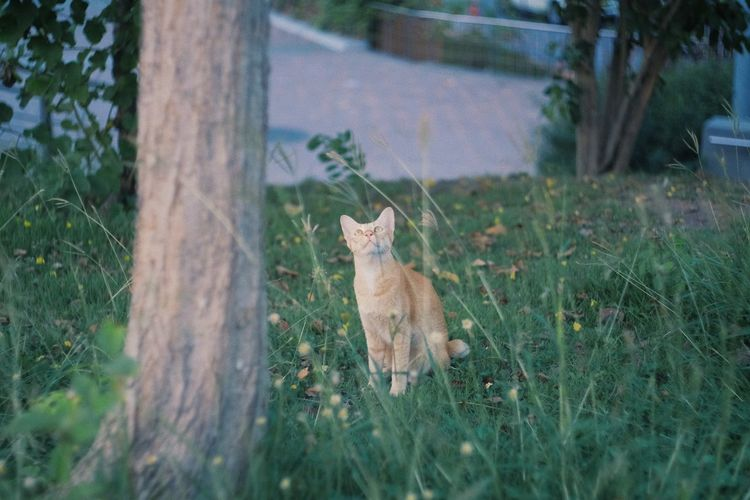 Cat on field