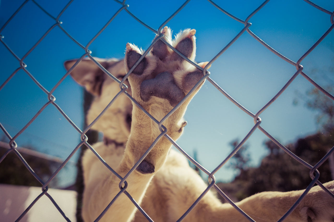 Close-Up Of Dog On Chainlink Fence Against Sky