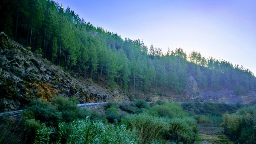 Tree Pinaceae Nature Landscape Mountain Pine Tree Forest