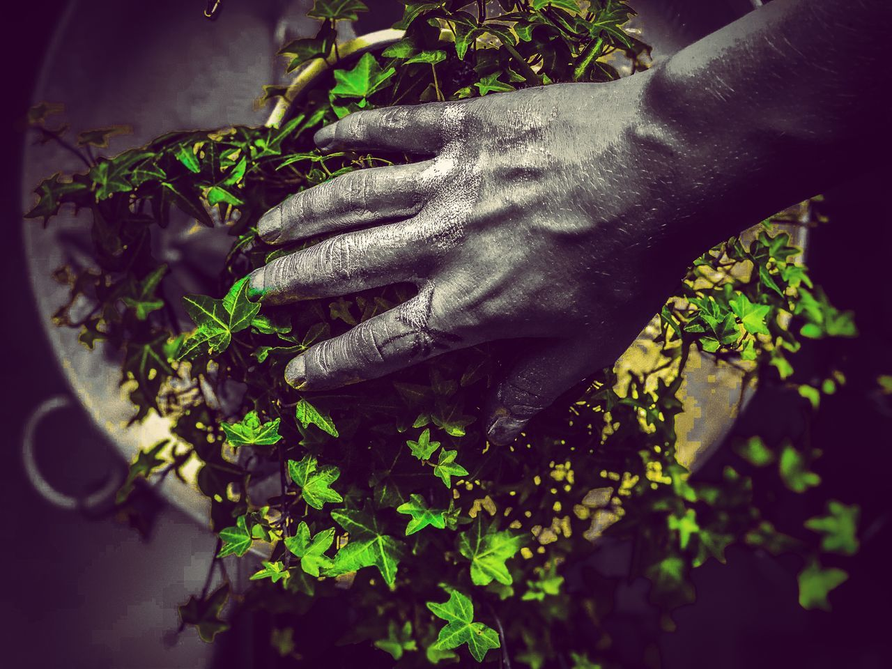 human hand, hand, human body part, plant, one person, leaf, real people, nature, plant part, growth, unrecognizable person, green color, day, body part, close-up, human finger, finger, holding, outdoors, gardening, herb, care