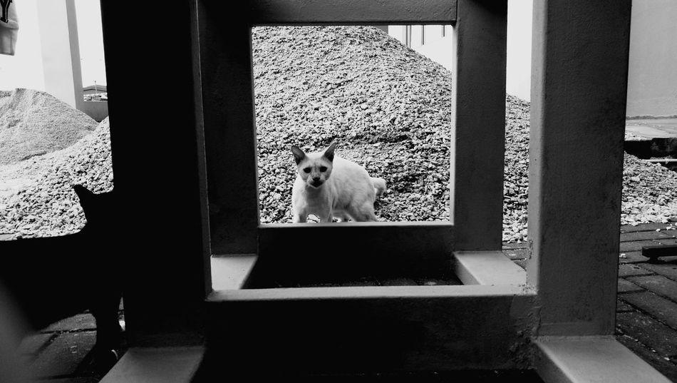 Cat Animal Themes Monochrome Photography Outdoors Photograpghy  Animal Love Animal Photography