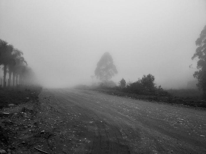 foggy road Tree