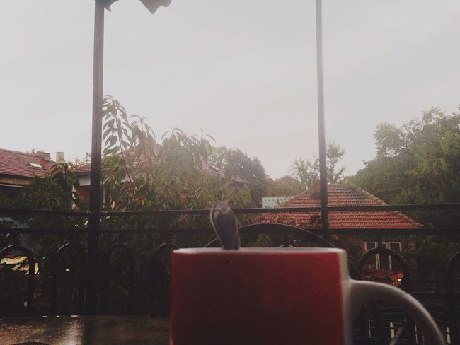 Rainy Days Tea Cup Friendstime Cold Days Foggy Warming The Soul Beauty In Nature