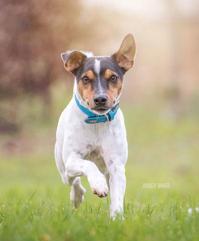 Eddi JuergenBauerPictures Nikon Dog Pets One Animal Animal Grass Portrait Outdoors Animal Themes Nature Happiness First Eyeem Photo
