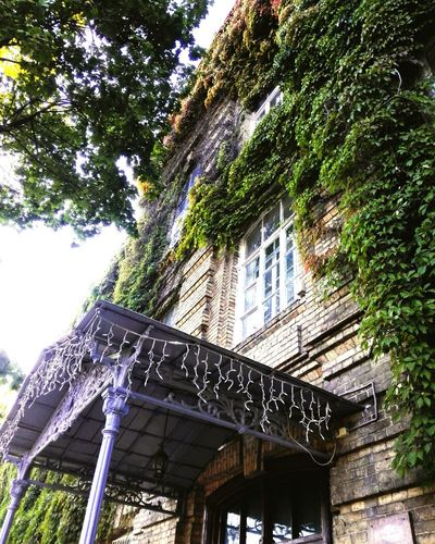Architecture Built Structure Window Outdoors Building Exterior Architectural Feature No People здание старинныйдом Low Angle View Green Color Growth Tree