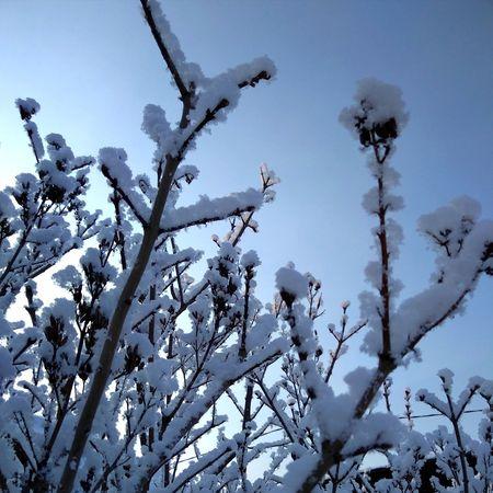 небо голубое голубоенебо дерево улица утро фон зима снег ветка ветви Beauty In Nature Winter No People Outdoors Snow Sky Day Cold Temperature Nature Tree Mountain Close-up Frozen