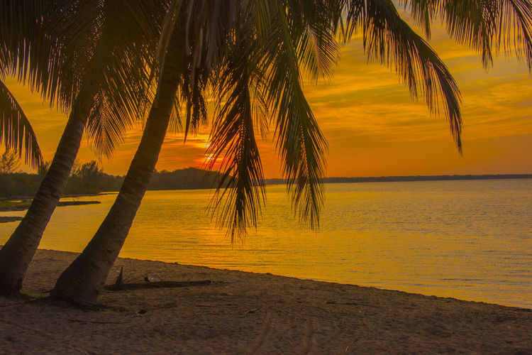 Beach Beauty In Nature Day Heat - Temperature Horizon Over Water Landscape Nature No People Outdoors Palm Tree Sand Scenics Sea Silhouette Sky Sun Sunlight Sunset Tourism Travel Travel Destinations Tree Tropical Climate Vacations Water