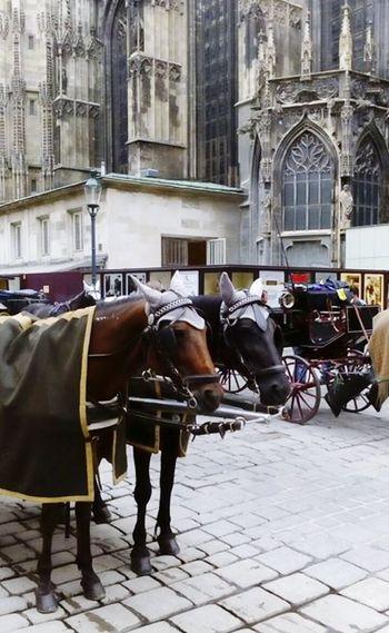 Wien Travel Horses Wonderful Wien
