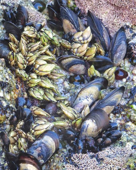 Delicias y pesares....🙈 Mariscos Frescos Abundance Day Outdoors No People Beach Nature Close-up Percebes Mejillones Marisco Frutos Do Mar EyeEmNewHere Summer2017