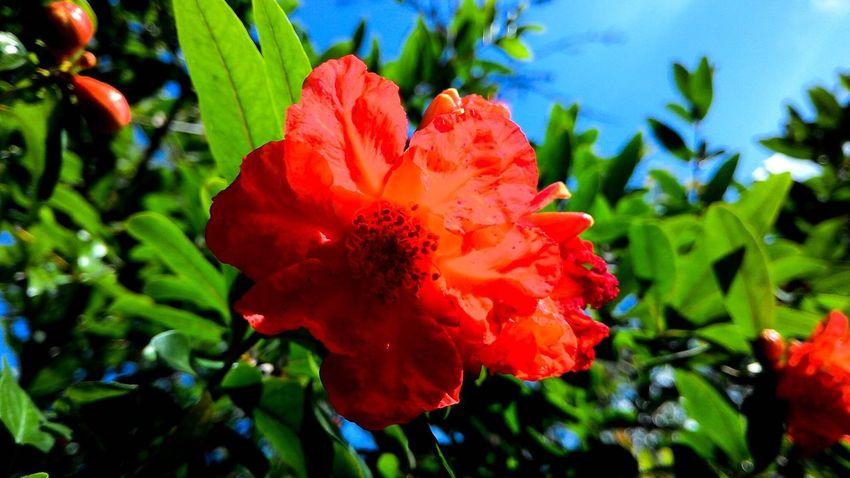Red Flower Green Leaves