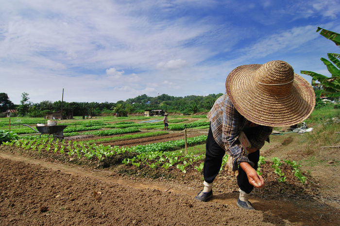 Farmer sowing vegetable seed in the morning Agriculture Asian  Asian Style Conical Hat Crop  Farm Farmer Field Growth Hat Nature Occupation One Person Outdoors Plant Plantation Planting Plowed Field Real People Rural Scene Sowing Sowing Seeds Vegetable Working