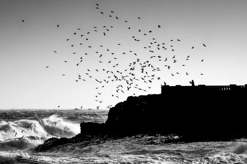 Apulia Italy Italia Puglia Italia Puglia South Italy Santa Maria Silhouette Birds Blackandwhite Italy Leuca Sea Sky