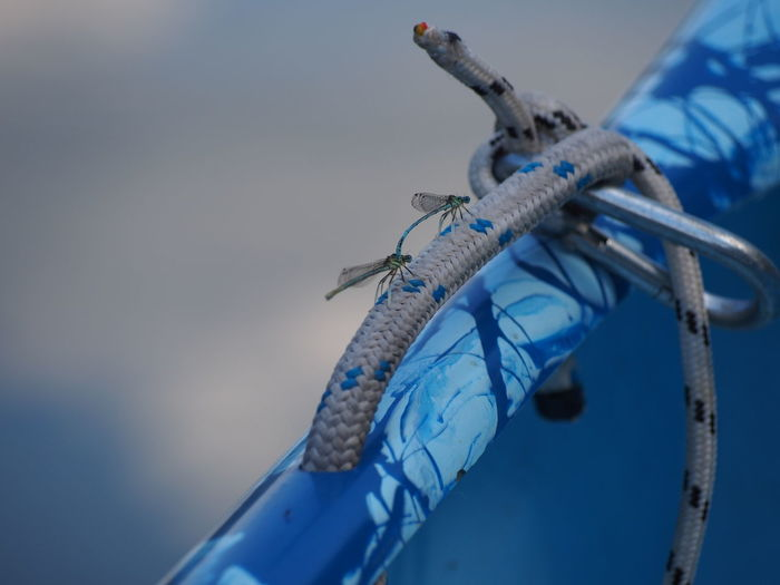 High angle view of dragonflies on boat