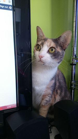 Alguém fugindo dos caras da marcenaria. Cat Pet