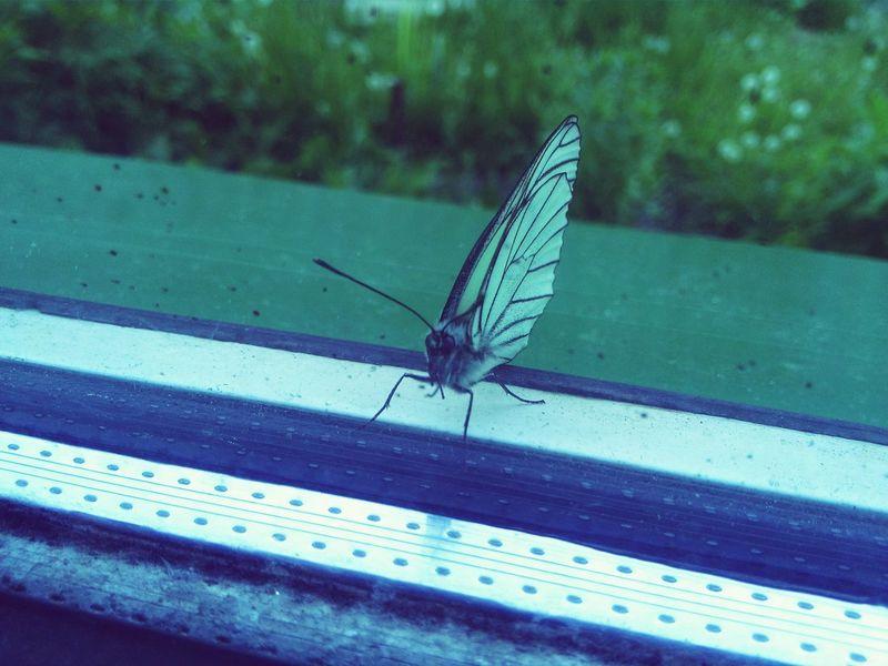 EyeEm Gallery Butterfly