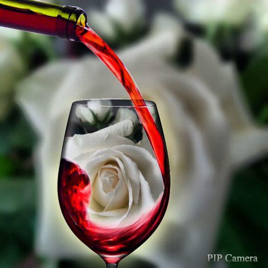a lovely rosea