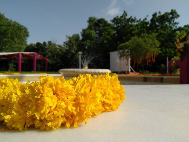 Flowers Fountain Yellow Flower Outdoors No People Day Fragility Freshness Paint The Town Yellow