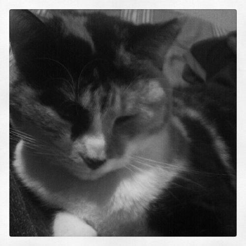 Cali 2 #gracias #cat Cat Gracias Gatica