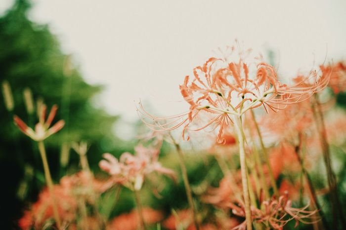 Flower Plant Growth Nature Fragility Close-up Beauty In Nature Flower Head Petal No People Freshness Day Outdoors