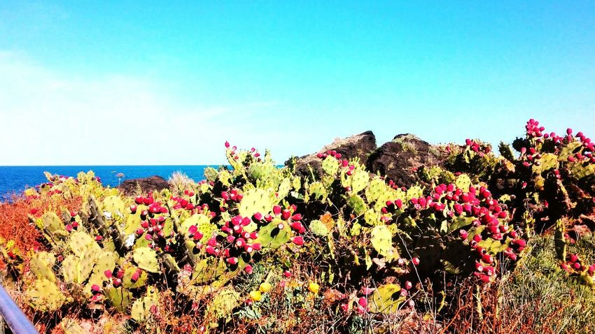 Flower Flower Head Sea Water Multi Colored Clear Sky Red Sunlight Sky Horizon Over Water