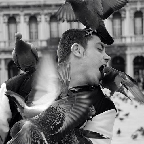 Man biting pigeon perching on his shoulder