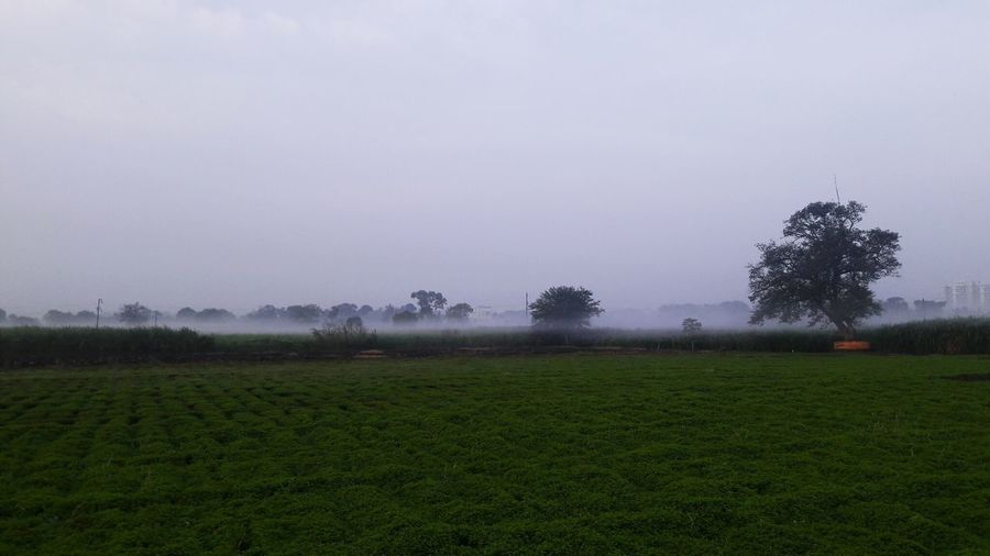 foggy morning.... Early Morning Nature Prosperity Farmland Fog Fog Over Field Green White Skh Light Morning Run View Tree Irrigation Equipment Rural Scene Fog Agriculture Field Sky Grass Cultivated Land Crop  Farm Agricultural Field Plantation
