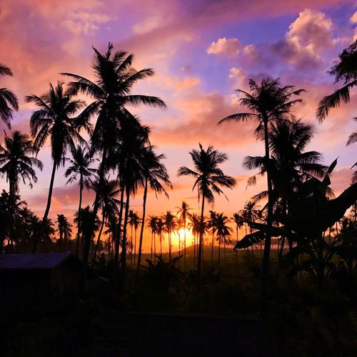 Sunset view ❤️ Sunset Palm Tree Tree Silhouette Nature Sky Beauty In Nature Scenics Tranquility Tranquil Scene Cloud - Sky Landscape Outdoors Eyemnaturelover Sunset_collection Sunset #sun #clouds #skylovers #sky #nature #beautifulinnature #naturalbeauty #photography #landscape