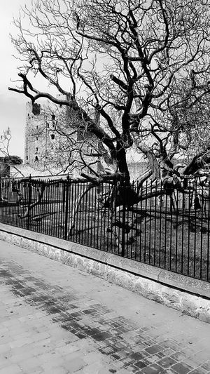 Old tree in Rochester Old Tree Rochester Castle Nostalgia Memories Black And White